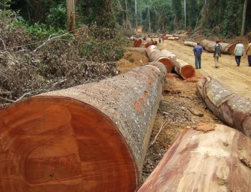 I loschi traffici del legname africano