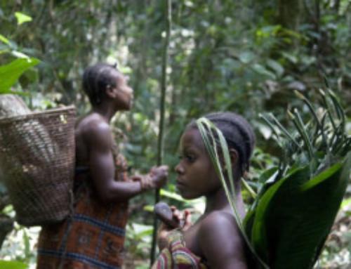 I pigmei del Centrafrica:più resistenti al covid-19?