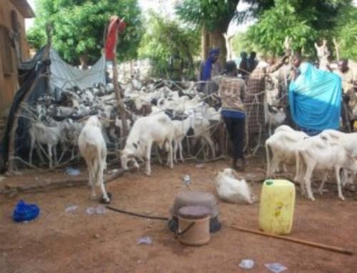 Il sacrificio e i sacrificati: lettera dal Sahel