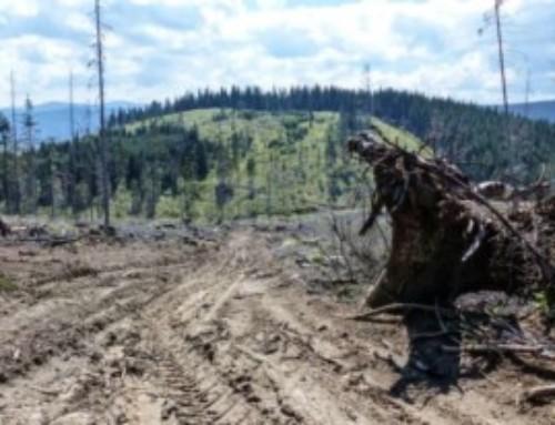 Il covid non ferma l'accaparramento di terre coltivabili nel Sud del Mondo