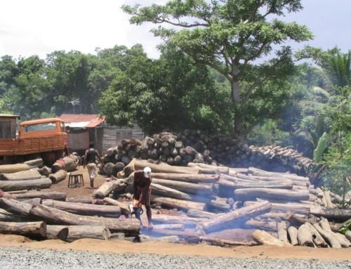 La deforestazione in Africa non si ferma