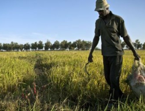 Sviluppo rurale in Africa: in ritardo sugli obiettivi di Agenda 2030