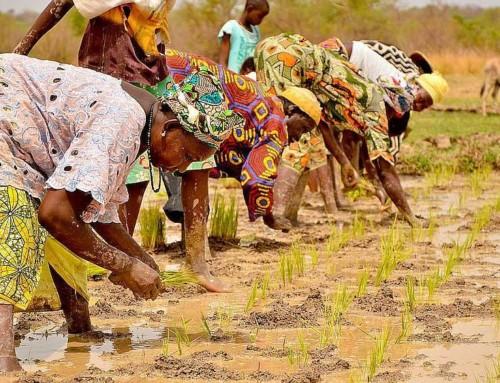 La pratica dell'agro-ecologia in Africa