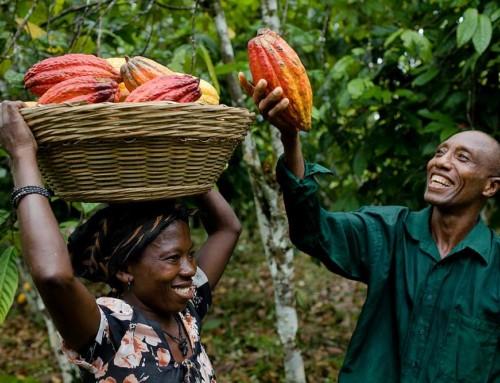 Il cacao ivoriano, i cittadini e i cambiamenti climatici