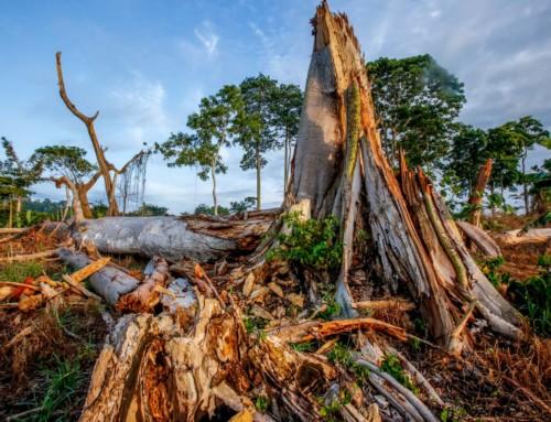 L'industria del cacao e la deforestazione in Africa