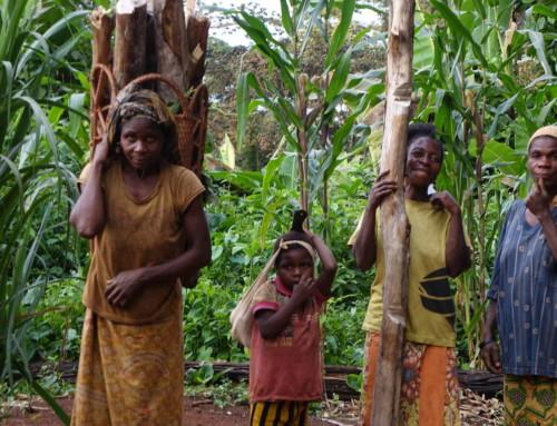 Foreste e pigmei Baka dell'Africa centrale sempre più minacciati