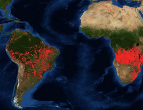 Anche le foreste dell'Africa centrale sono invase dalle fiamme